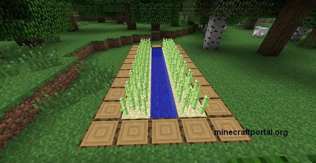 Ферма тростника в Minecraft - шаг четвертый